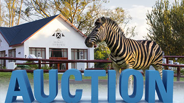 CHECK OUT OUR NEW AUCTION