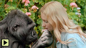 Koko - The Gorilla Who Talks